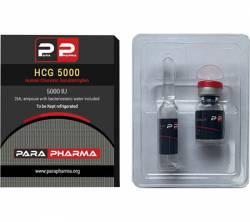 HCG 5000iu (1 vial)